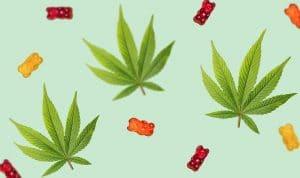 ourson CBD et feuille de cannabis